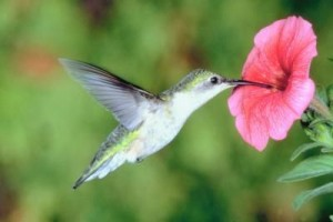 article-new_ehow_images_a05_l3_c4_attract-butterflies-hummingbirds-garden-800x800