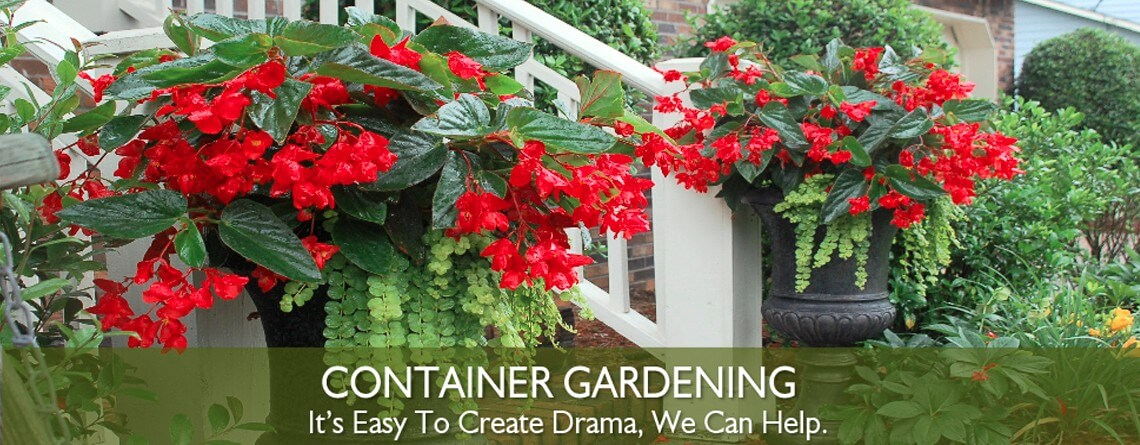 container gardening Beauty