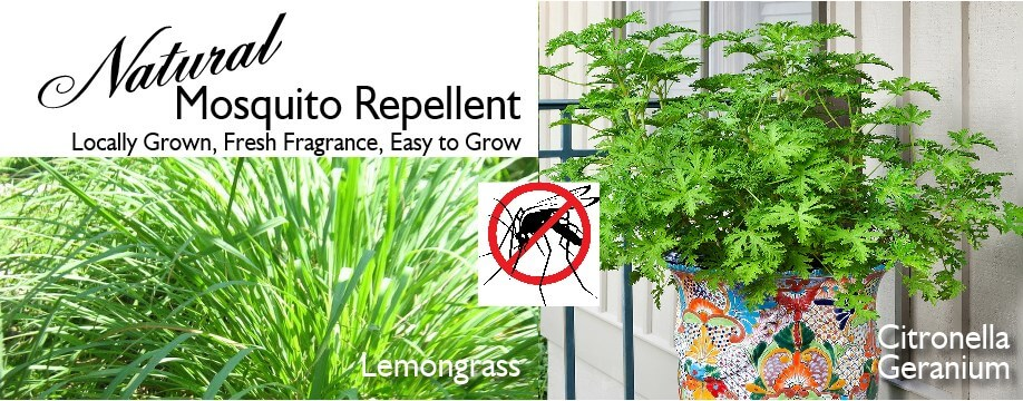 mosquito repellent natural rotator