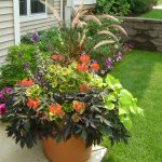 outdoor living plants snellville