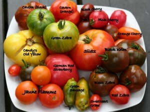 Some varieties of heirloom tomatoes
