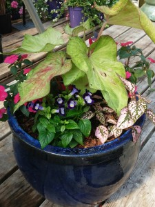 mothers day container garden 2