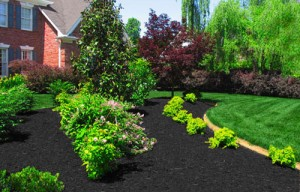 black-mulch-landscapes1