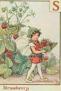 fairy strawberry