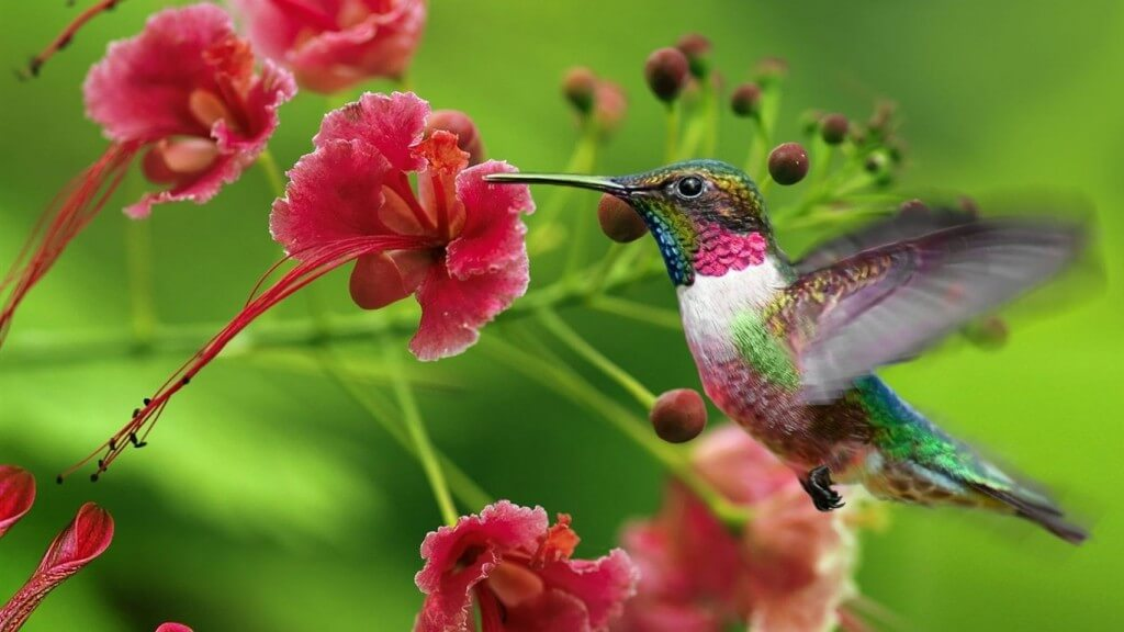 Hummingbirds In Your Georgia Garden