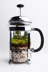 French-Press-Terrarium