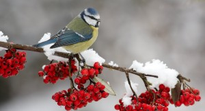 winter_bird