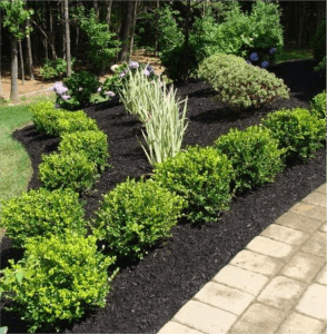 The 10 Must Have S In Your Landscape 1 Foundation Plants
