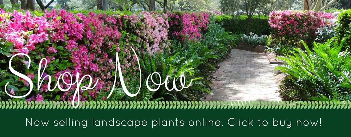 Shop For Quality Plants Here