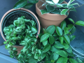 houseplants10