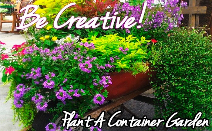 Container gardening2