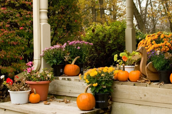 FALL IS THE TIME FOR PLANTING – BUT WHY?