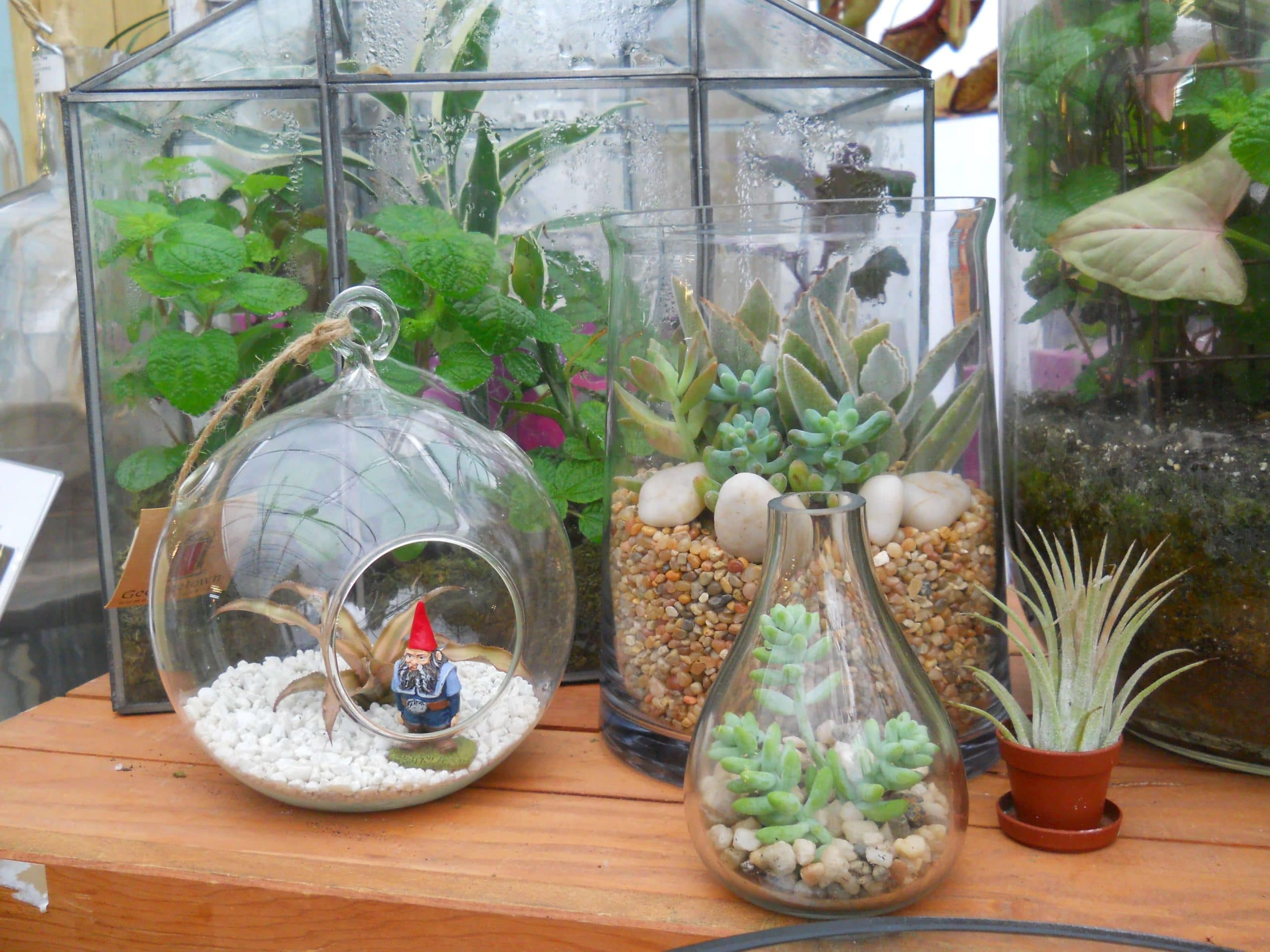 Terrariums: Bring The Outside In With Plants