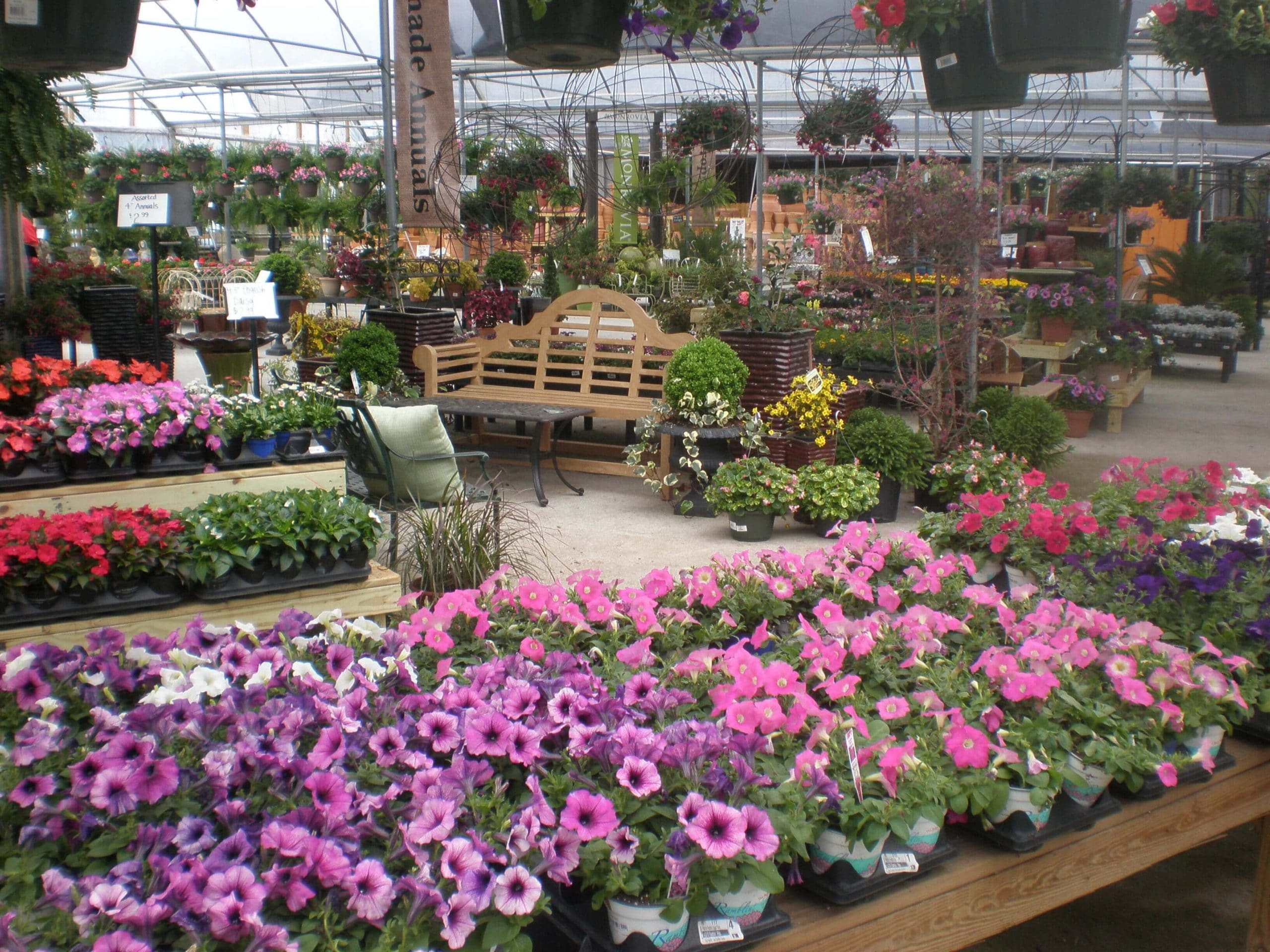 As We Wrap Up A Chilly February, Our Garden Center Is Filling Up With A  Plethora Of Spring Blooms. If You Have Started Thinking About Your Garden,  ...