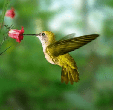 Tuesday At The Tree: Attracting Hummingbirds and Butterflies
