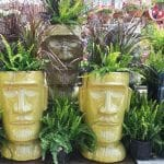 family tree aztec containers