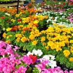 assortment plants snellville