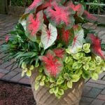 container pots snellville