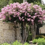 spring trees for sale snellville