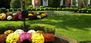 Prepare Your Yard for Fall!