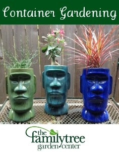 Container Gardening: Portable Prettiness
