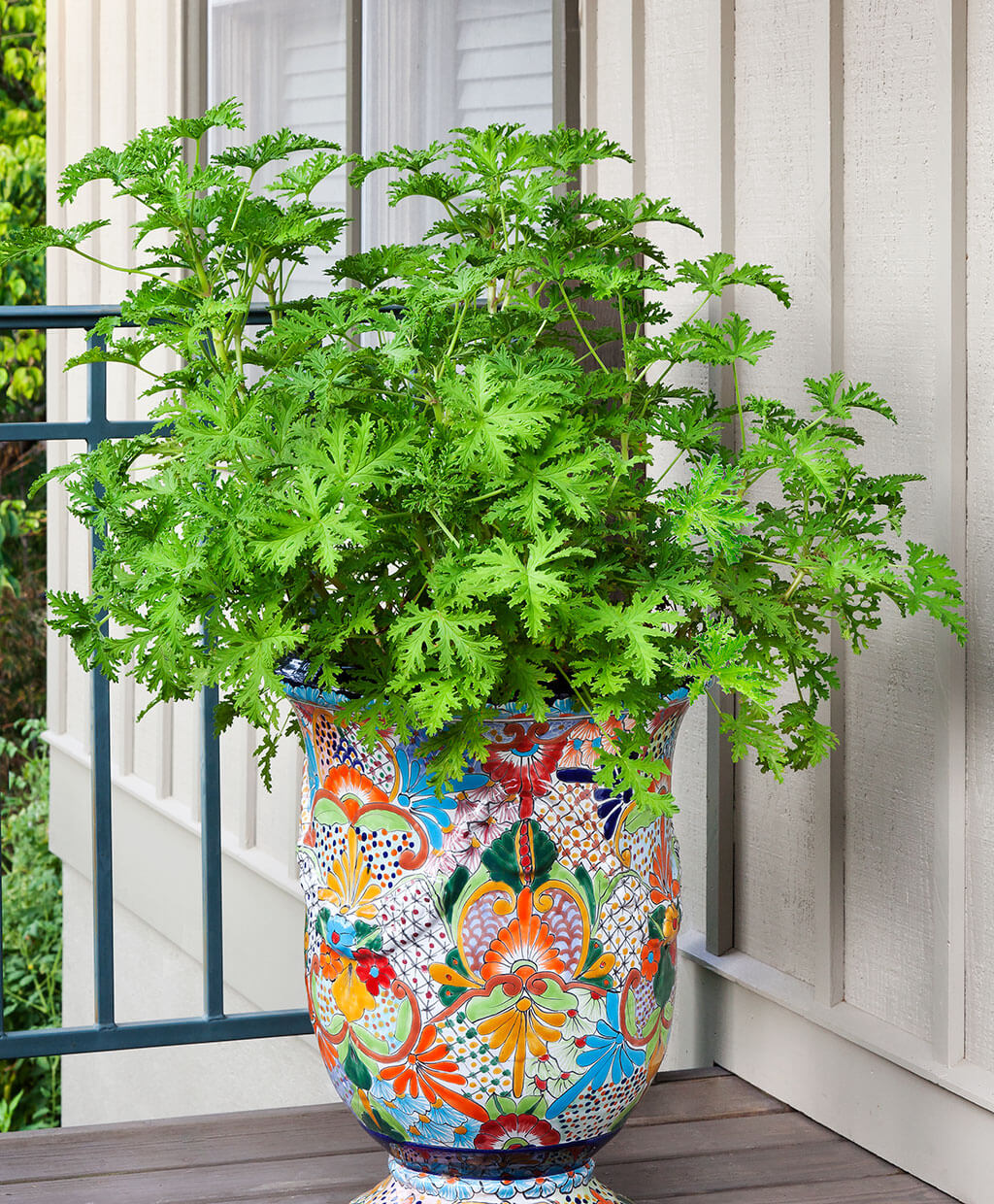 Growing Mosquito Repellent Plants