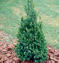 fw_plant_holly_steeds