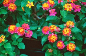 Gardening 101: What's the Difference Between Annuals and Perennials?