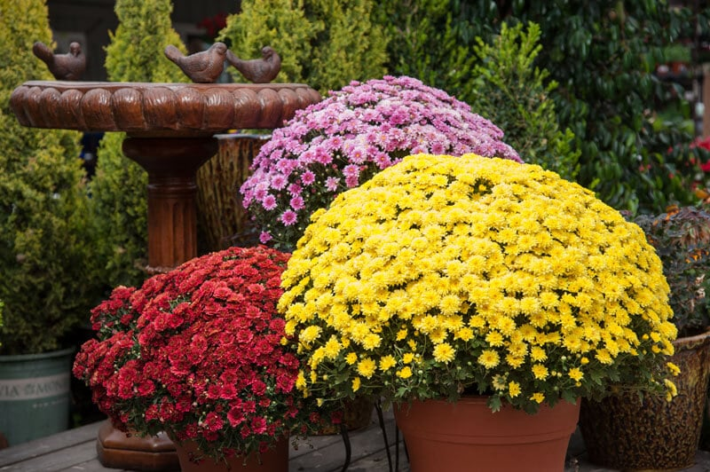 Gardening 101: The Joys of Fall Annuals
