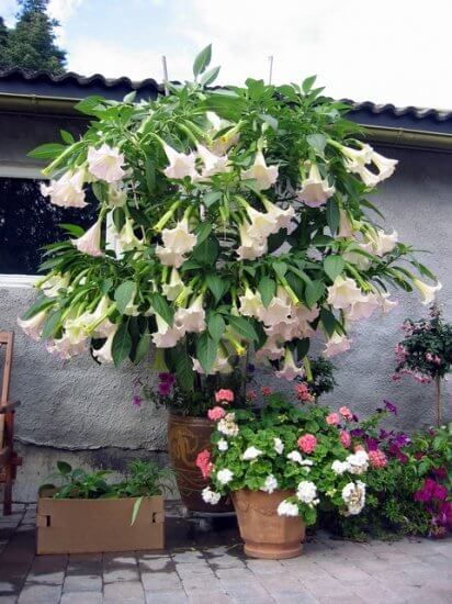 Looking for a Stunning Accent Plant?