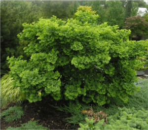 "The 10 ""Must-Haves"" for your Landscape: #2 Trees"