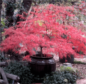 "The 10 ""Must-Haves"" for your Landscape: #5 Pops of Color"