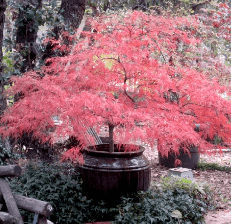 """The 10 """"Must-Haves"""" for your Landscape: #5 Pops of Color"""