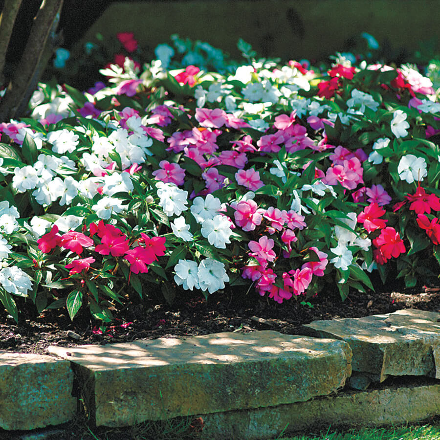 Steps to a Perfect Shade Garden