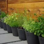 Herb containers