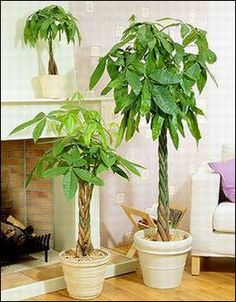 Would You Like To Sleep Better? And Breath In Your Home Better? 6 Plants For Your Bedroom