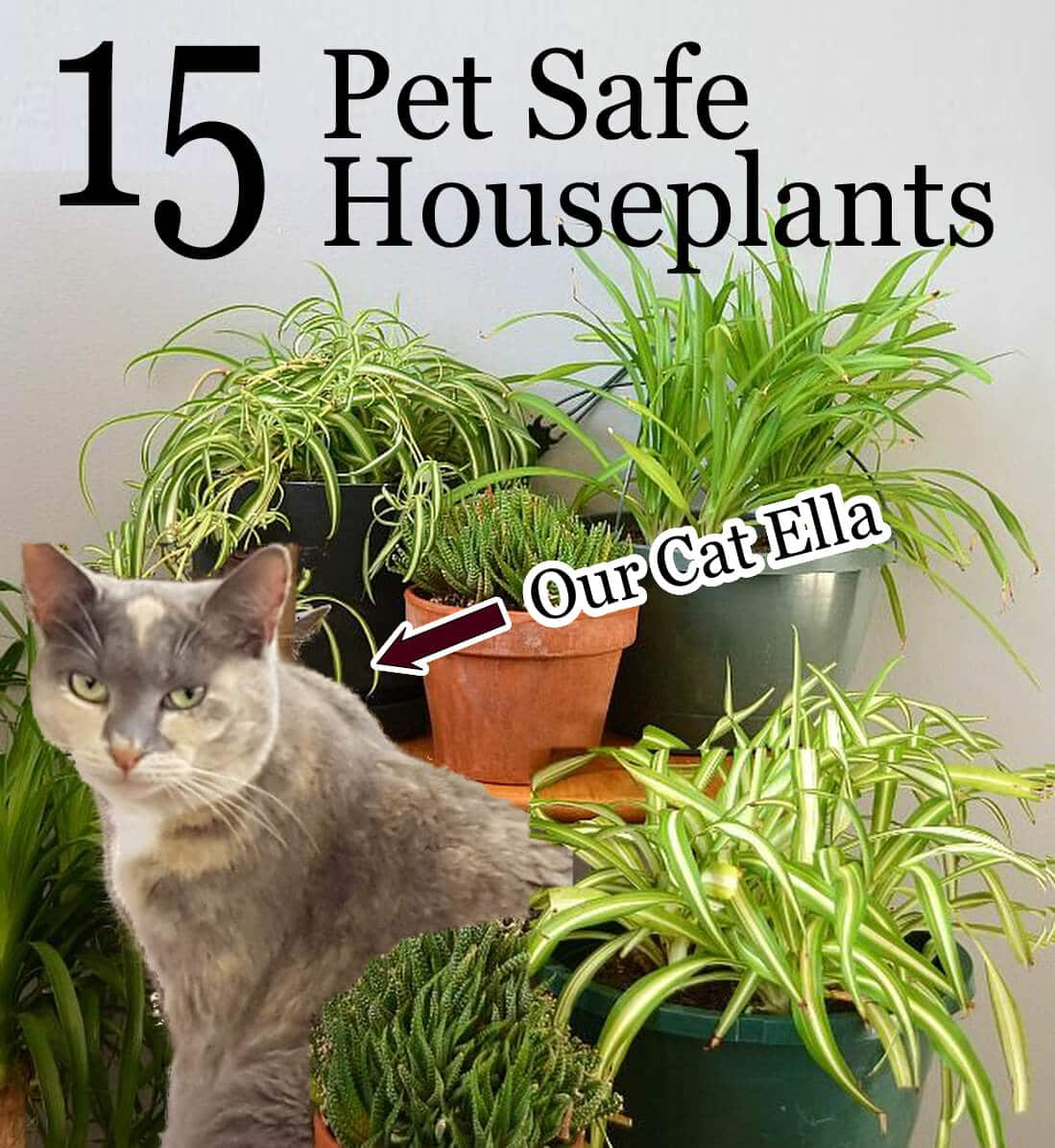 Non Toxic Houseplants For Pets