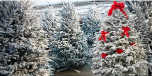 Christmas Trees and Flocked Trees