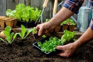 Start Your Garden From Seed