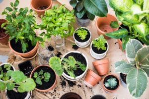 Twelve Healthy Benefits of Houseplants